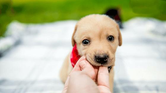Dog Bite Attorney in West Jordan, UT