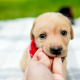 Dog Bites Case Lawyers